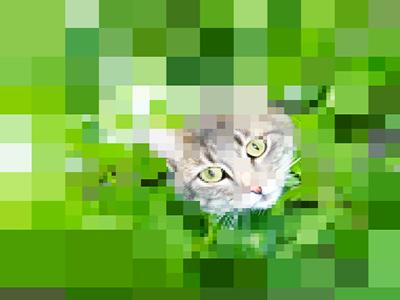 Kedi Bulmaca