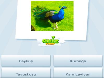 Hayvan İsimleri Bulmaca 2
