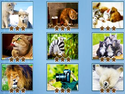 Hayvan Yapbozları 2