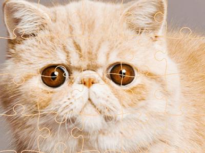Kedi Yapbozları 2